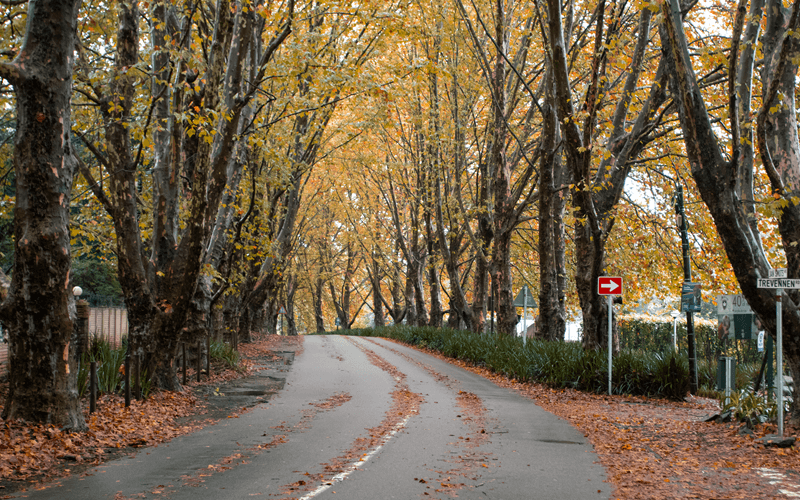 Trees along a road in hillcrest